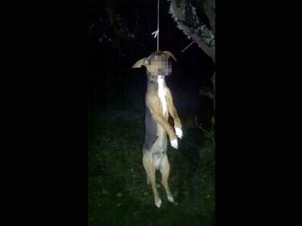 Obešena životinja kraj puta. Foto: Amaterski snimak