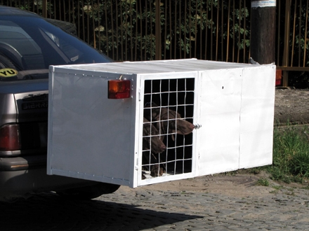 Psi iz Vranja biće udomljavani u Novom Selu kod Vrnjačke Banje FOTO: D. Ristić/OK Radio