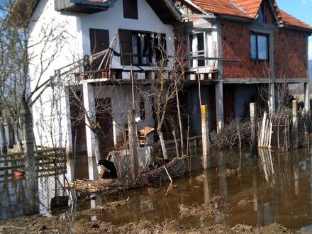 Psi zarobljeni u poplavljenom dvorištu FOTO: M. Spirić