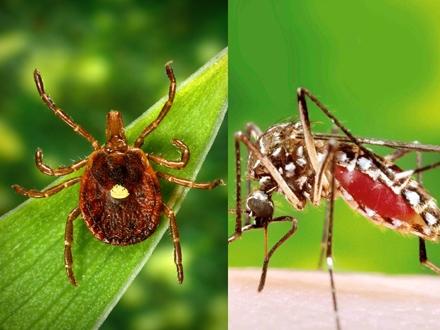 Krenula ofanziva na krpelje i komarce FOTO: OK Radio