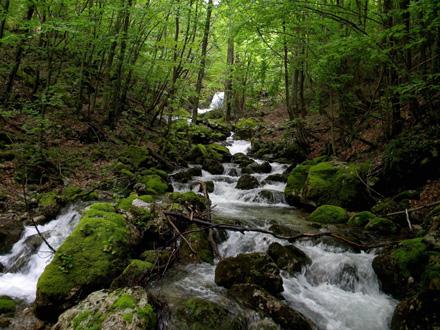 Hidroenergija je prirodan resurs koji treba iskorišćavati u razumnoj meri FOTO: Pinterest