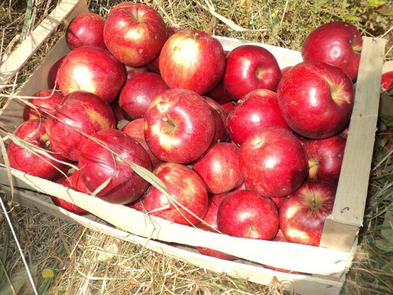 I žvake su skuplje od kilograma jabuka. Foto: S.Tasić/OK Radio