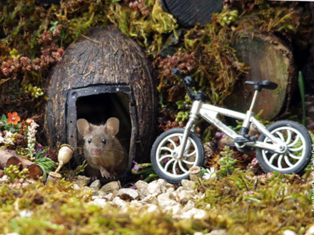 Miš u svojoj kućici FOTO: Bored Panda/Simon Dell