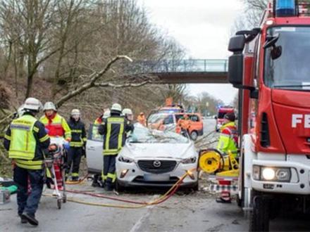 Srušilo se drvo na automobil FOTO: YouTube screenshot