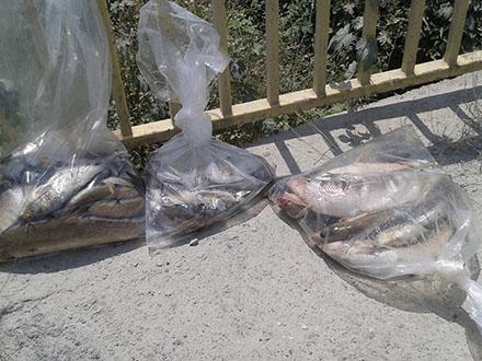 Uginula riba iz Južne Morave. Foto: FB