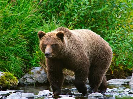 Pas hrabro napao zapanjenog medveda FOTO: Profimedia
