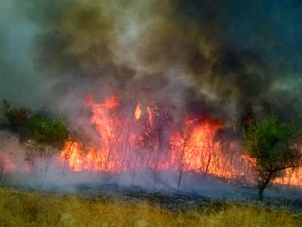 Ukoliko uočite požar odmah zovite 193 FOTO: vranje.org.rs