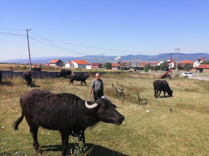 Sulejman sa svojim životinjama. Foto: S.Tasić/OK Radio