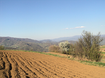 Samo za registrovana poljoprivredna gazdinstva FOTO: S. Tasić/OK Radio