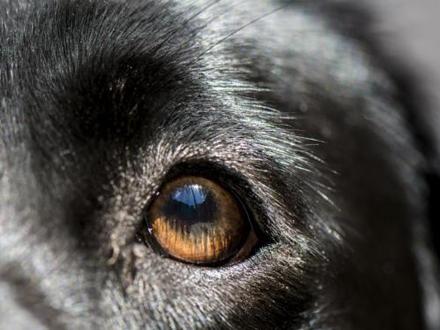 Pas je bio miljenik celog komšiluka FOTO: Thinkstock