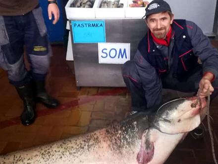 Som, 56 kilograma! FOTO:  Zora Jakovljevic Ex Golubovic / Facebook