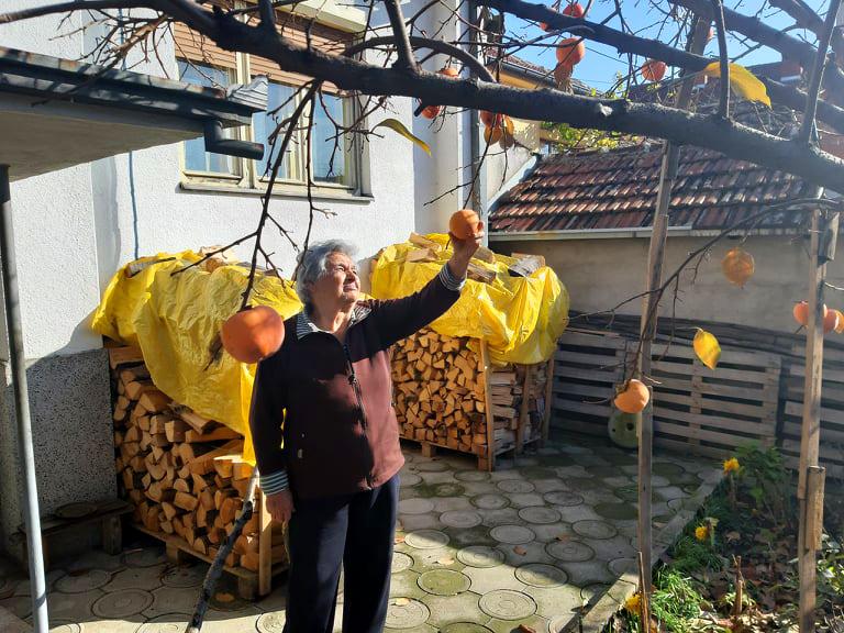 Blaga vranjska klima prija ovom voću FOTO: S. Tasić/OK Radio