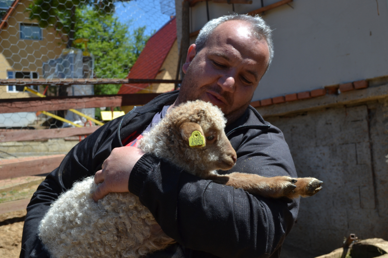 Nenad Ordić sa jagnjetom vitoroge žuje. Foto: G.Mitić/OK Radio