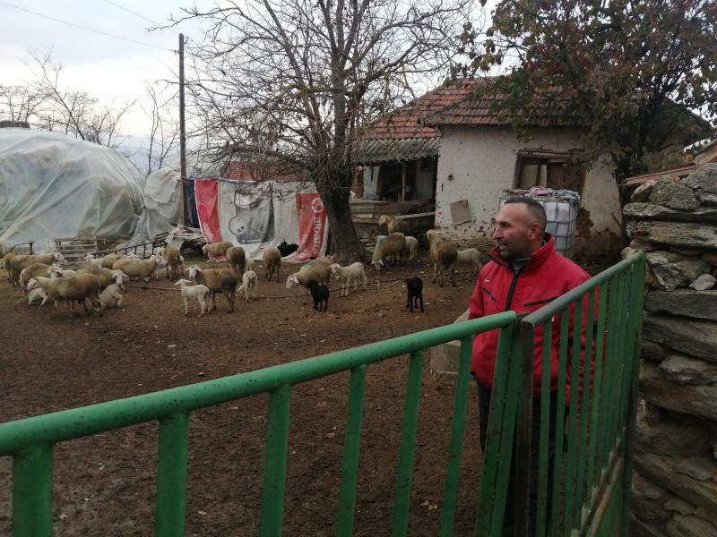 Bajram Bećiri sa svojim stadom. Foto: S.Tasić/OK Radio