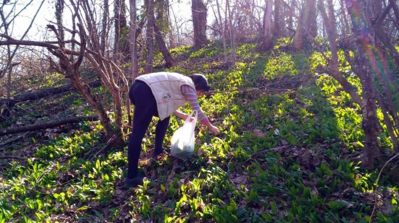 Sremuš u šumama Poljanice. Foto: S.Tasić/OK Radio