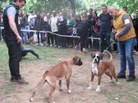 10. Međunarodna izložba pasa svih rasa, Vranje 2019.