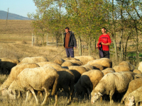 Profesor ovčar, Dalibor Marković