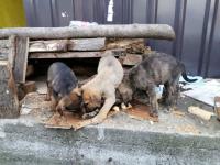 Napušteni psi