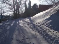 Kukavica sneg