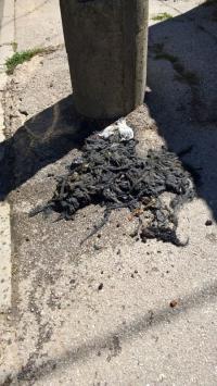 Šta sve radnici Vodovoda zatiču u kanalizaciji