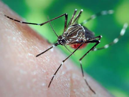 Upozorenje svima, a posebno PČELARIMA: Počinje akcija suzbijanja insekata