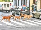 Psi lutalice haraju Bujanovcem
