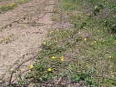 ZLO NA DELU: Sekirom mu uništili mlad voćnjak
