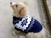 Džemperići za kuce kao opuštajuća terapija