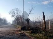 OLUJA oborila drvo kod Jumkovog stadiona