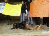 Novi protest protiv AVENIJE MB