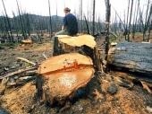 ŠUMOKRADICE pustoše jug Srbije
