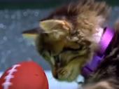 Kako izgleda kad se mačke takmiče u fudbalu? VIDEO