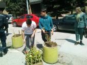 Gimnazijalci i Komrad sadili cveće