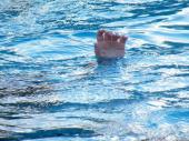 Željko (24) plivao preko zabranjenog jezera, počeo da tone i iskliznuo drugu iz ruke. Još ga nema