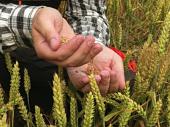 Oživljavanje sela: Besplatna zemlja za mlade poljoprivrednike