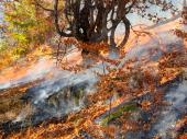 Marić: Sutra očekujemo dolazak Iljušina za gašenje požara