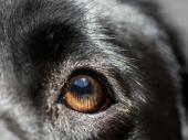 UŽASNO MUČENjE PSA: Polili ga vrelom vodom, pas zadobio strahovite opekotine
