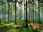 Otkrivena najstarija šuma na svetu: Stara više od 385 miliona godina
