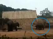 Horor u cirkusu: Napaljeni slon napao čuvara (uznemirujući video)