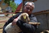 ETNO SELO VILE JEFIMIJA:  Retke životinje, netaknuta priroda i  zdrava hrana (FOTO)