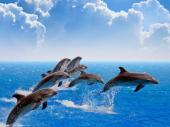 Predivan prizor: Više od 300 delfina u