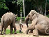 U varšavskom zoo vrtu slonove će lečiti medicinskom marihuanom