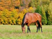 Zlostavljanje i sakaćenje konja u Francuskoj: Policija ne zna šta je motiv