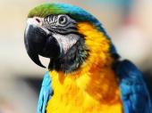 Papagaj upozorio vlasnika da na vreme pobegne iz kuće koju je zahvatio požar