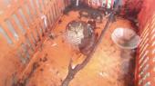 Ptici grabljivici je potrebno lečenje: Slomljenog krila pala u dvorište