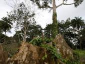 Prete nam nove bolesti i pandemije: Krčenje šuma je primarni pokretač