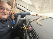 Vladica naišao na smuka i ugrejao ga u autu kako ne bi uginuo
