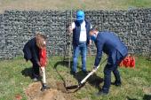 Knauf Insulation organizovao akciju sadnje stabala: Drvo za Surdulicu (FOTO)