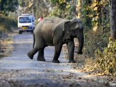 Indija: Rođeni slonovi blizanci, prvi put u 80 godina